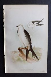 Ridgway 1893 American Bird Print. Swallow Tailed Kite 01